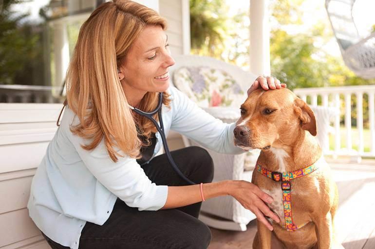 Признаки грамотного специалиста — на что обратить внимание при выборе ветеринара