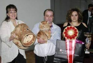 Выставка кошек: правила, подготовка и участие