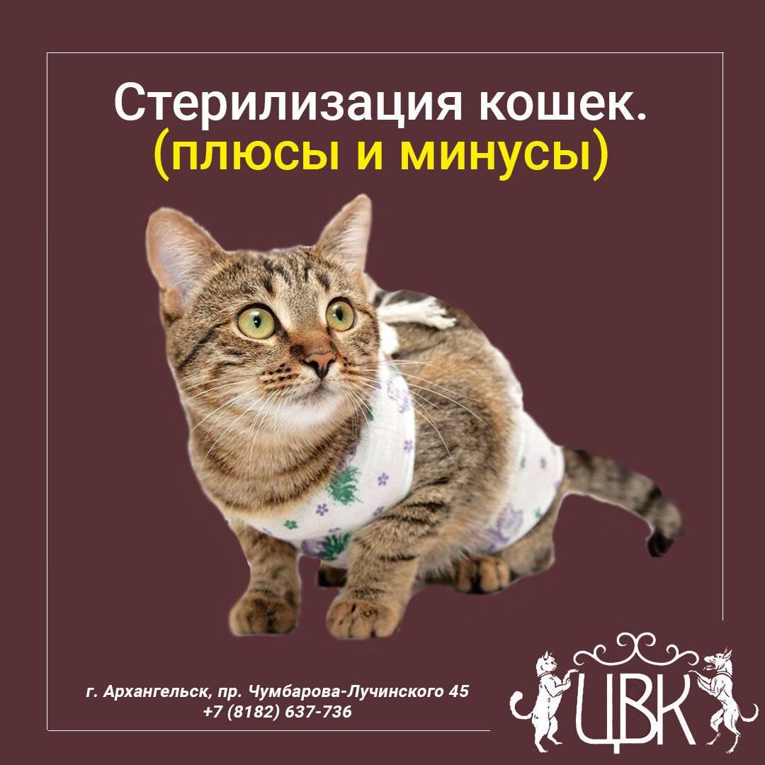 Кастрация кота – подробно о процедуре и последствиях