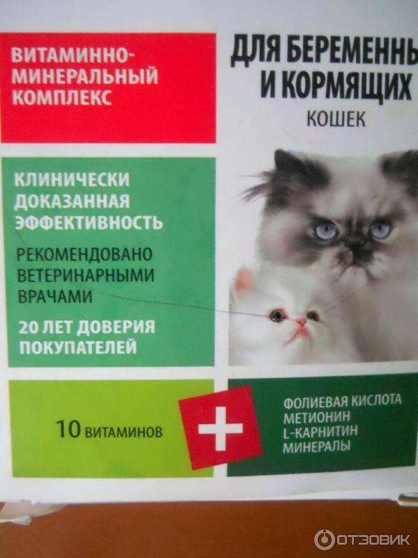 Виды витаминов для кошек: от выпадения шерсти, для иммунитета, для беременных и какие лучше