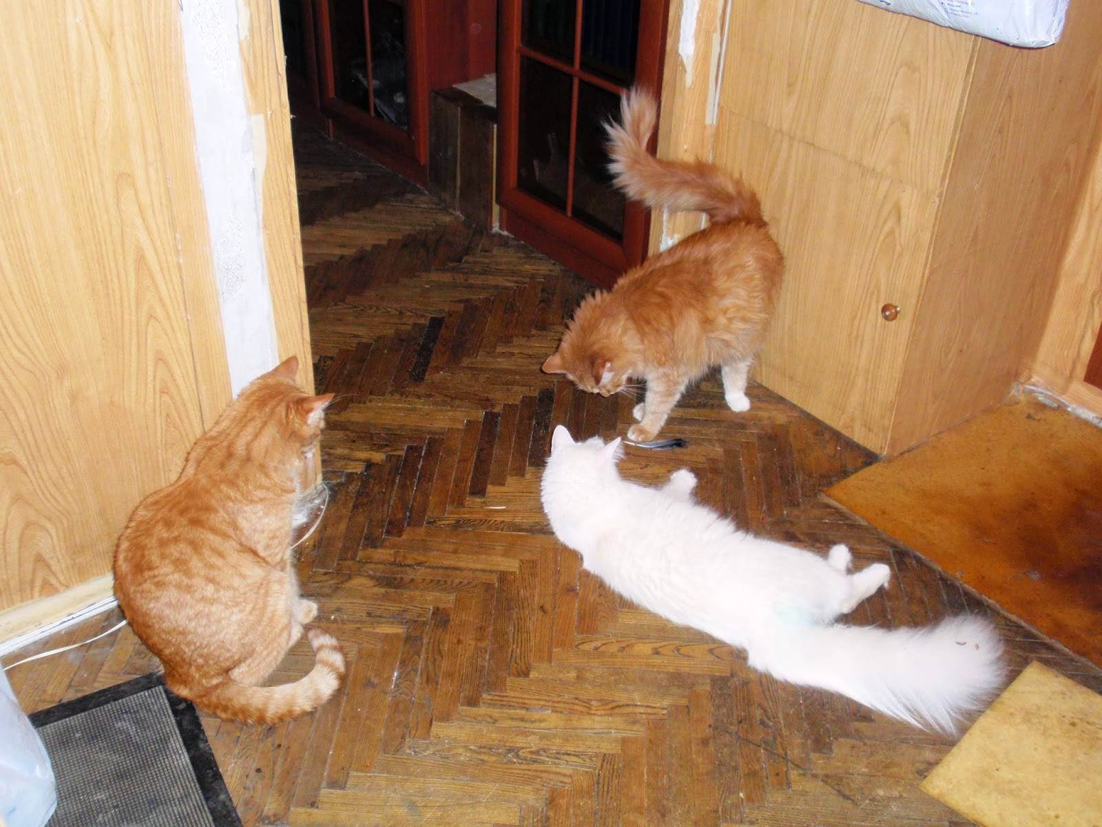 Кошки и их хозяева: любят ли коты своих хозяев и скучают ли по ним? как кошки выражают любовь и лечат ли людей?