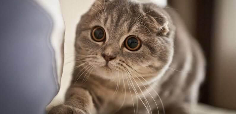 Лечение с помощью кошек