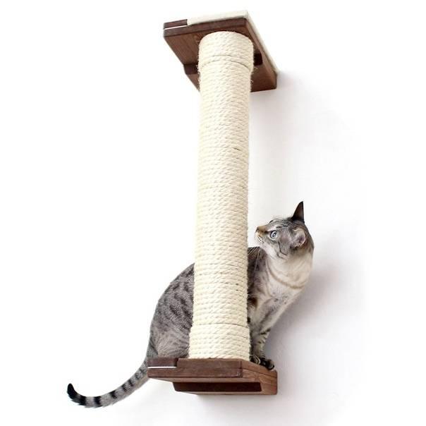 Как приучить кота или кошку к когтеточке?