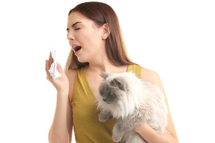 Аллергия на кошек: симптомы и что делать? | компетентно о здоровье на ilive