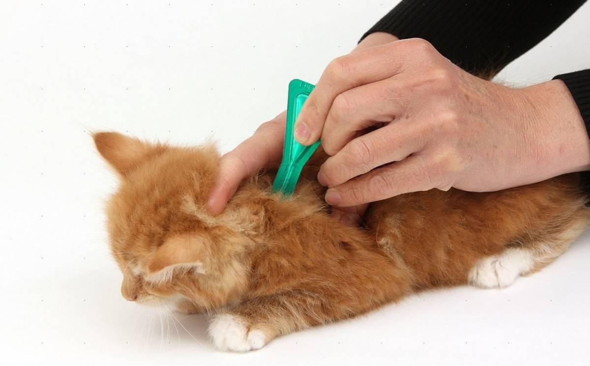 Капли на холку от досаждающих блох для любимых кошек