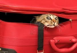 Как перевозят кошек по россии и за границу в поездах и самолете: правила перевозки, документы и стоимость