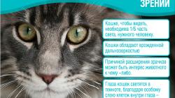 Симптомы бешенства у кошек. признаки бешенства у кошек и меры его профилактики