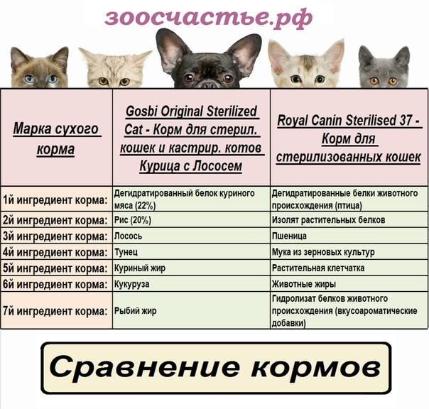 Корм для кошки: как выбрать качественный