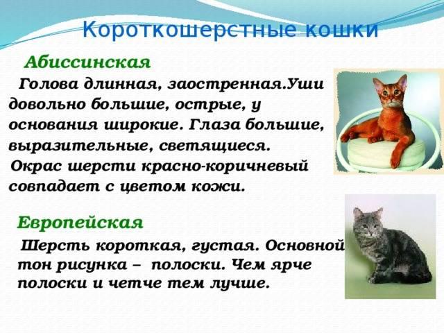Длинношерстные кошки: описание пород животных с длинной шерстью с фотографиями и названиями