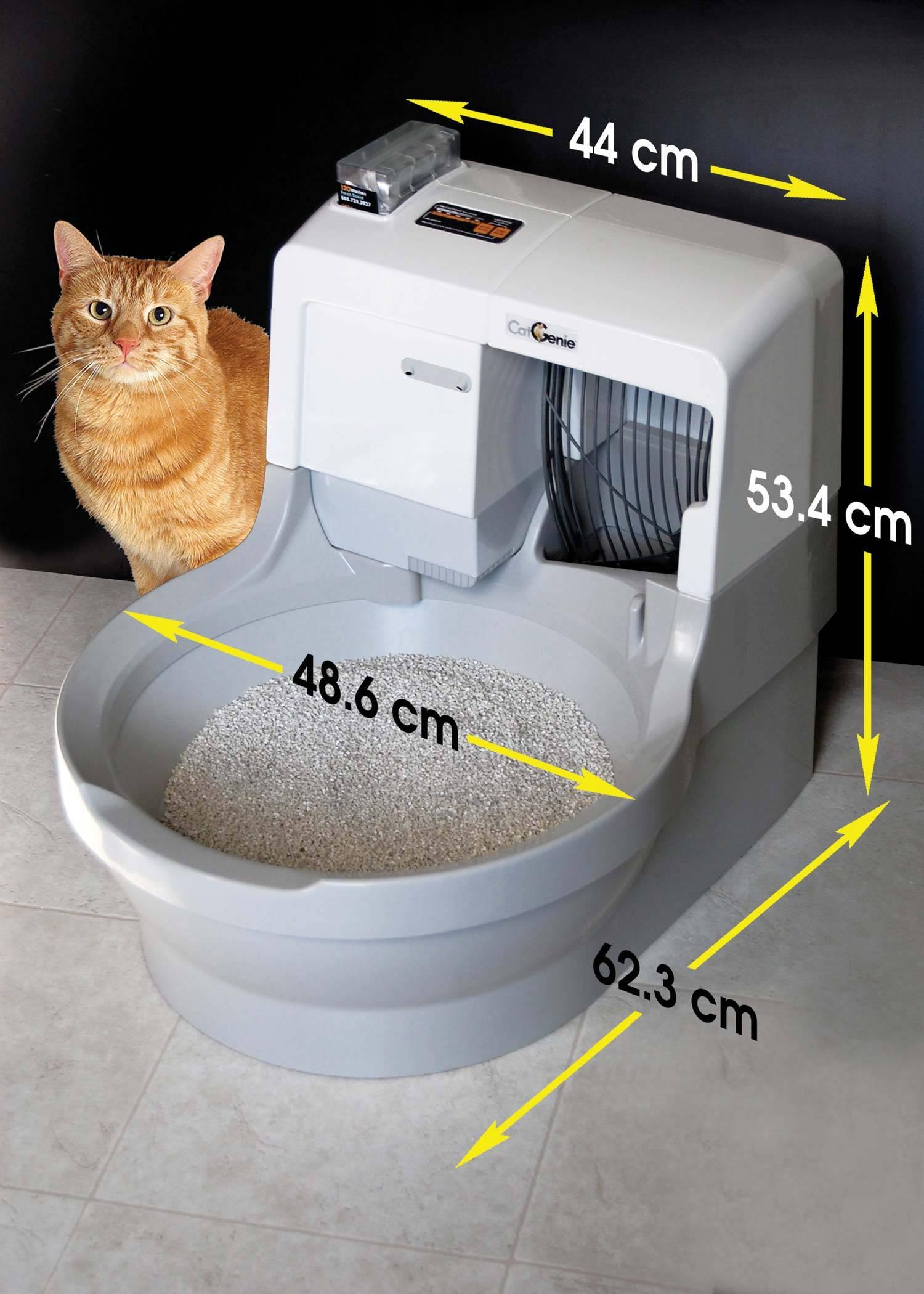 Туалет для кошек: выбираем идеальную модель кошачьего биотуалета