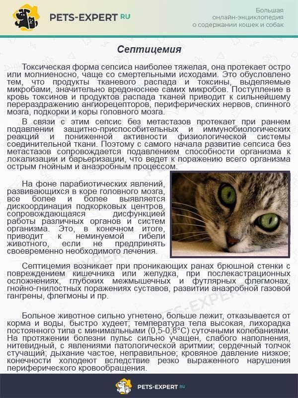 Байтрил для кошек: инструкция по применению, дозировка, как и куда колоть