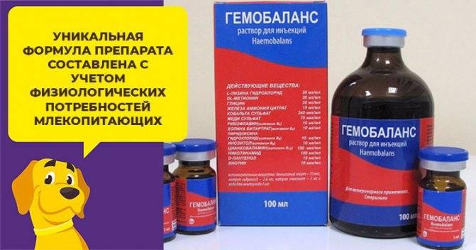 Ветеринарный препарат «гемобаланс» для кошек: описание, состав и форма выпуска, инструкция по применению