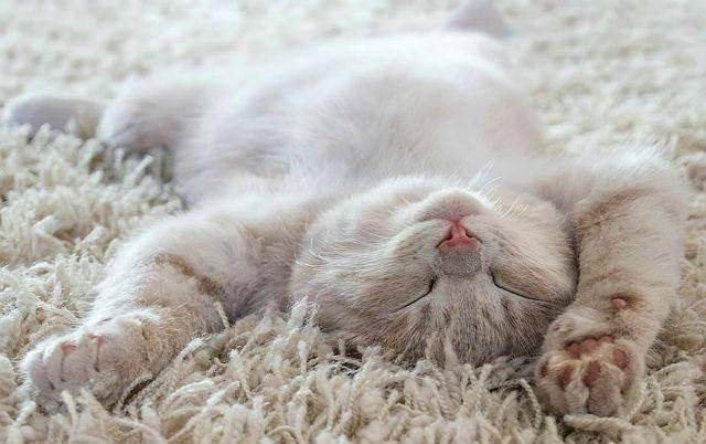 Почему кошка вялая