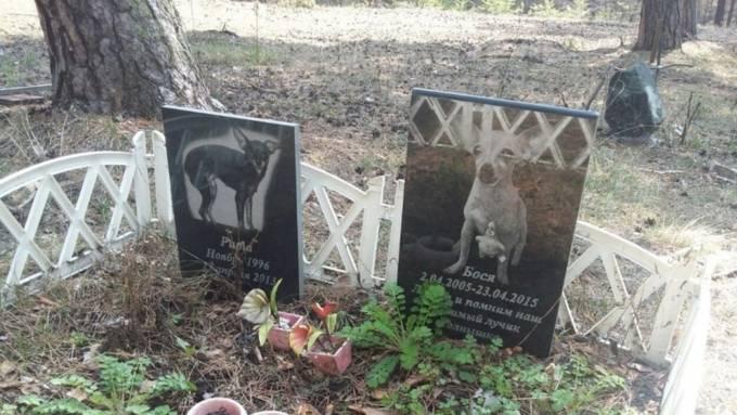 Основные правила, как похоронить кота зимой