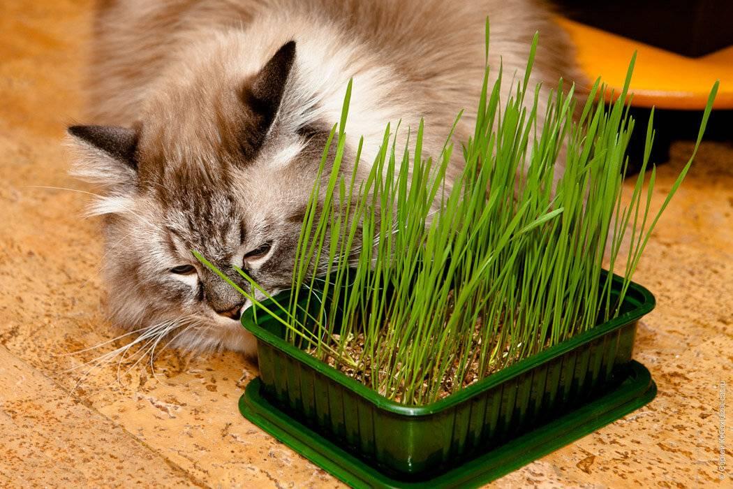 Тыквенные семечки — полезные свойства и противопоказания. полезны ли семена тыквы, можно ли есть с кожурой, жаренные или сырые