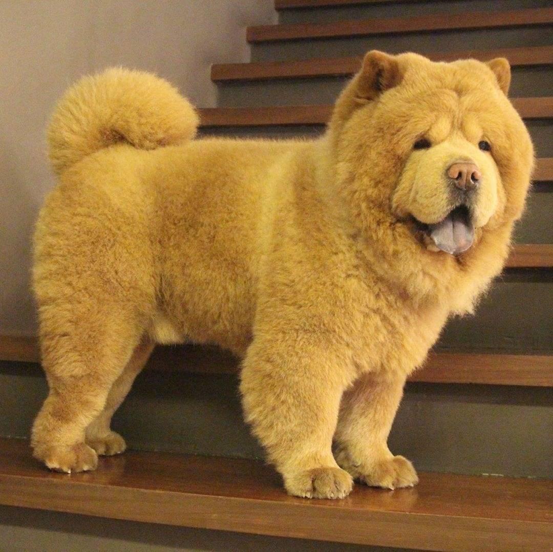 Топ-10 лучших в мире пород собак