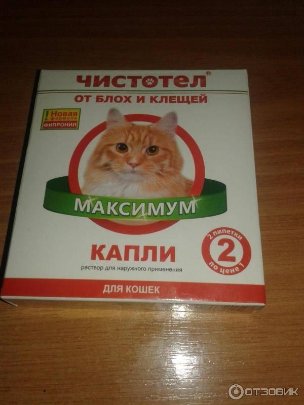 Капли от блох для кошек: отзывы и инструкция по применению