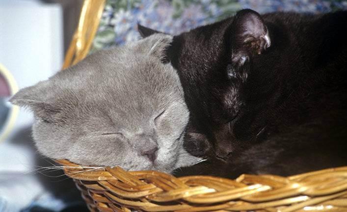 Читать онлайн книгу кошки. генетика и племенное разведение - инна шустрова бесплатно. 1-я страница текста книги.
