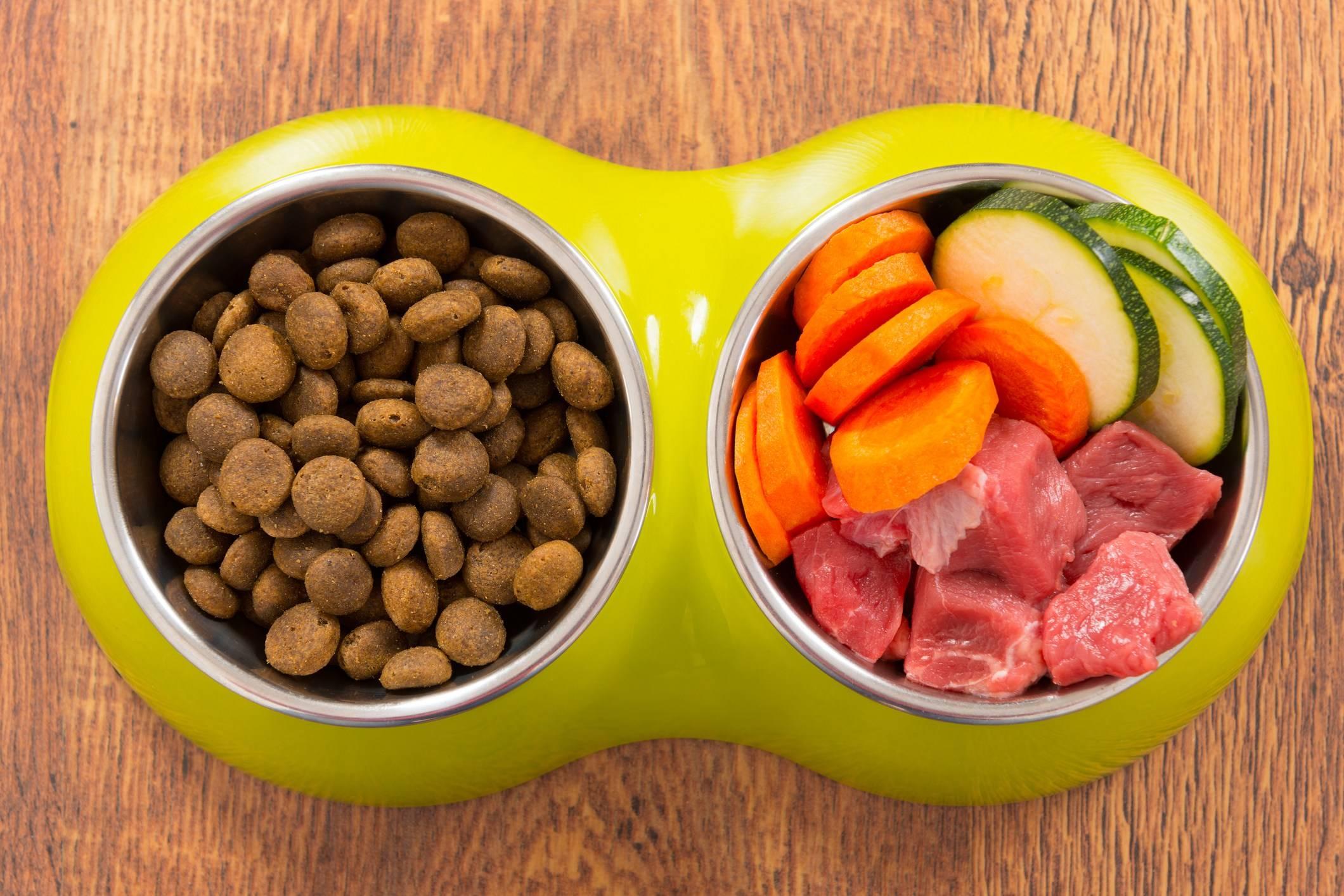 Можноли кошку кормить только сухим кормом: плюсы иминусы сушки, чем отличается отнатуралки ивлажного корма, что давать маленькому котенку + отзывы