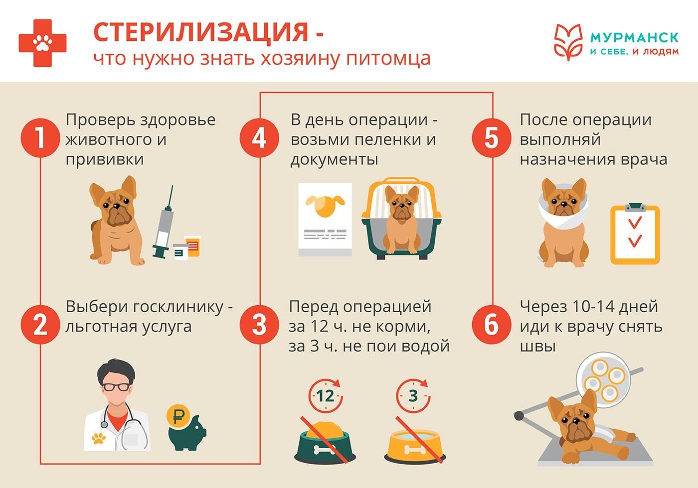 Прививки котятам – обязательны или нет