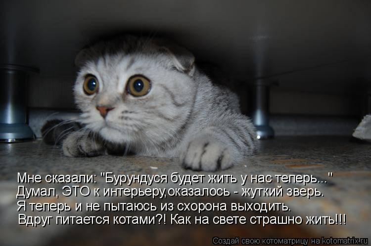 Что будет если котенка бить. почему нельзя бить кошек