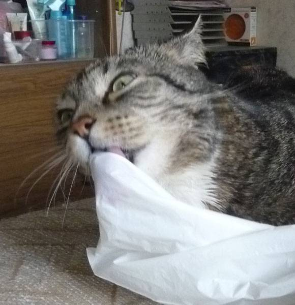 Причины, из-за которых кошка может лизать руку