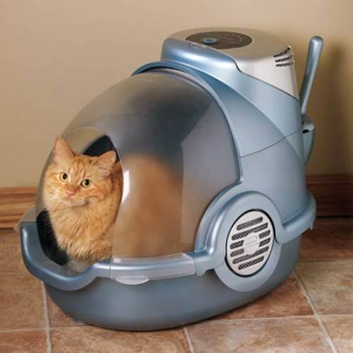 Рейтинг наполнителей для кошачьих туалетов: какой лучше, виды, как выбрать самый хороший