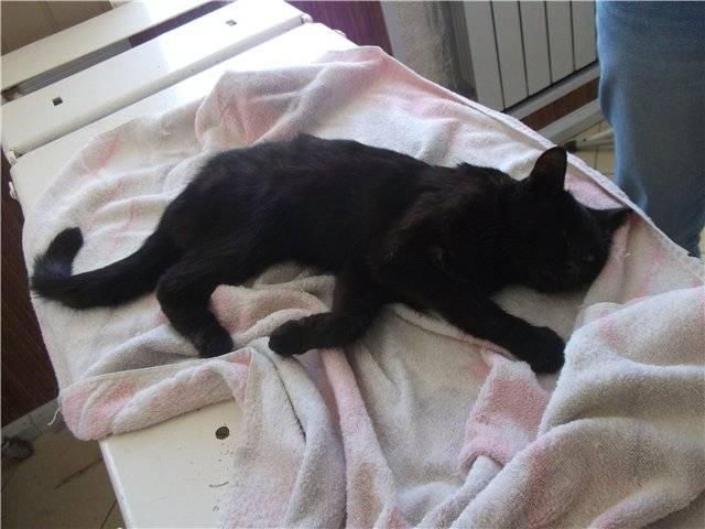 Ушиб хвоста у кошки симптомы и лечение