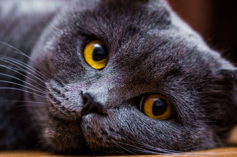 Можно ли смотреть кошке в глаза и почему
