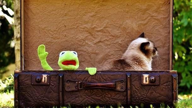 Важные правила, чтобы поездка с домашними животными прошла на отлично