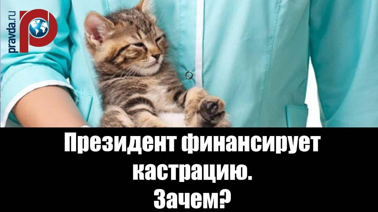 Почему кот орет после кастрации: 5 фактов, о которых вы не знали