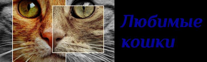 Классы кормов для взрослых кошек и котят: описание видов и категорий, классификация по консистенции, сухой и влажный, возрасту и другое