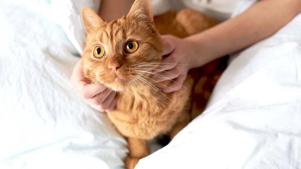 Почему умирают котята: причины смерти новорожденных и малышей постарше, помощь питомцу