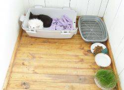 Адаптация взрослой кошки в новом доме