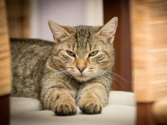 Панкреатит симптомы лечение у кошек