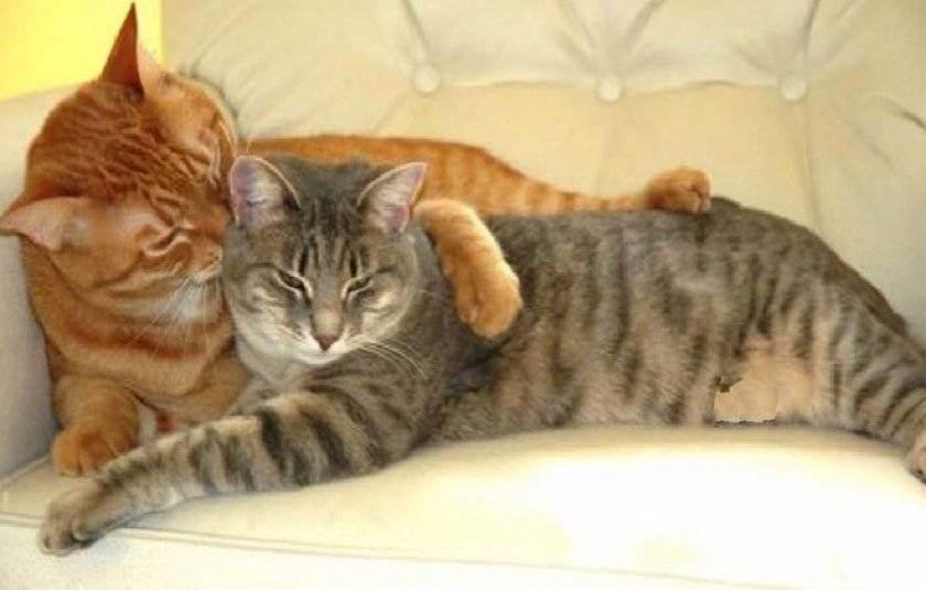 Как вязать кошек: читаем во всех подробностях