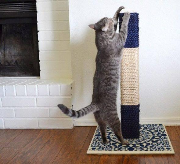 Делаем так, чтобы кот не драл обои и мебель: кошки которые не дерут обои