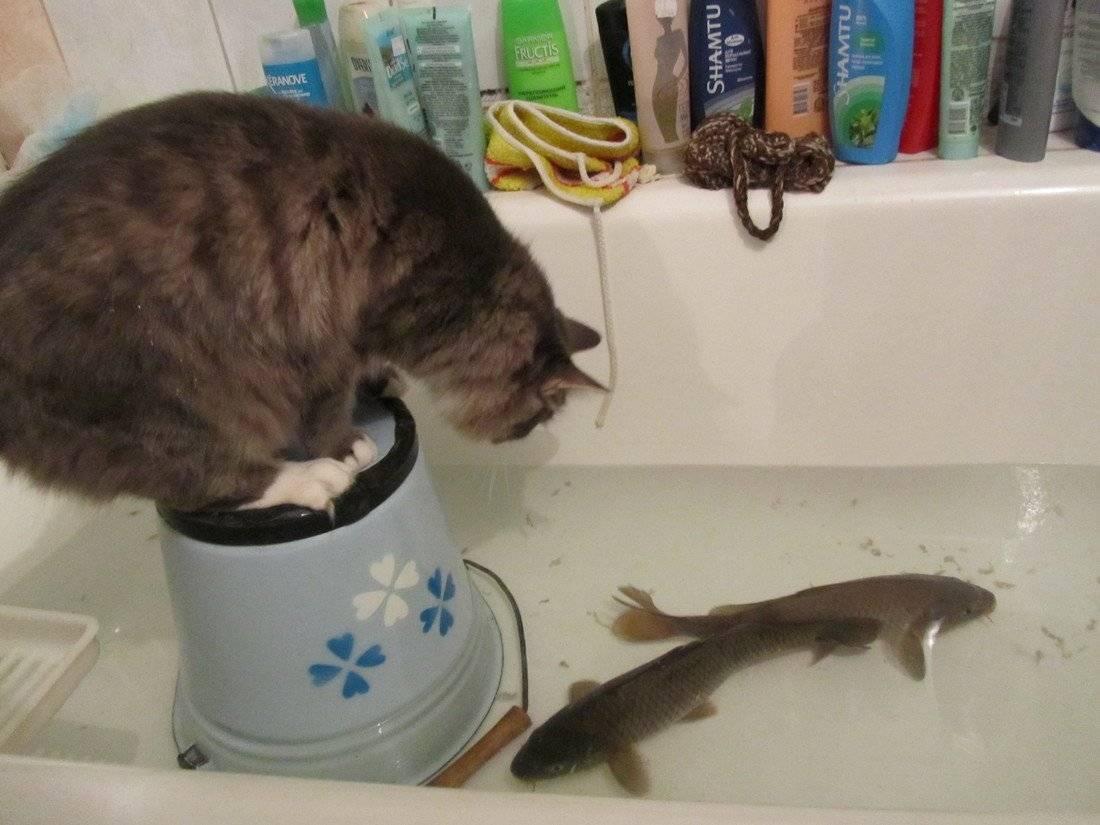 Почему кошек нельзя кормить рыбой?
