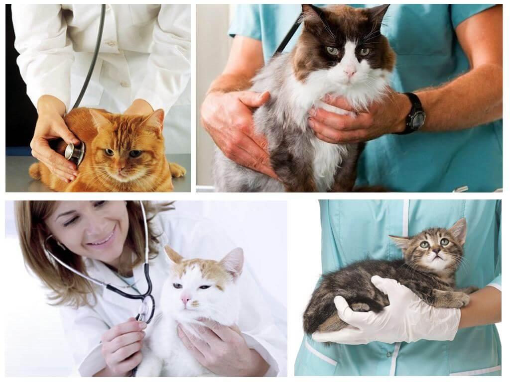 Аллергия на кошек – последствия для взрослых и опасна ли для детей