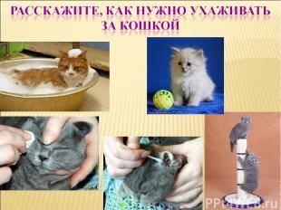 Как ухаживать за котенком: 135 фото и видео примеры ухода за котенком. советы заводчиков и ветеринаров