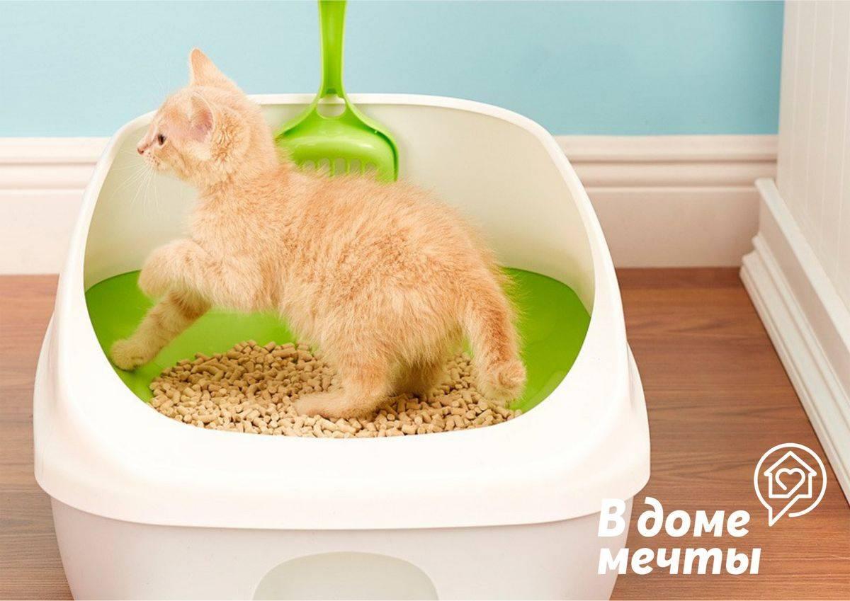 Как быстро приучить кошку к лотку: с наполнителем и без