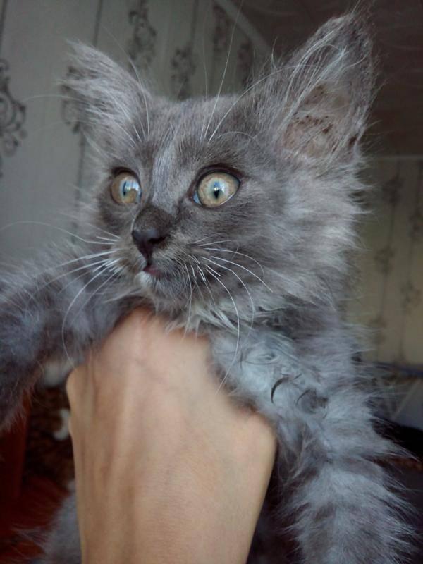 12 причин почему ломаются усы у кошки 12 причин почему ломаются усы у кошки