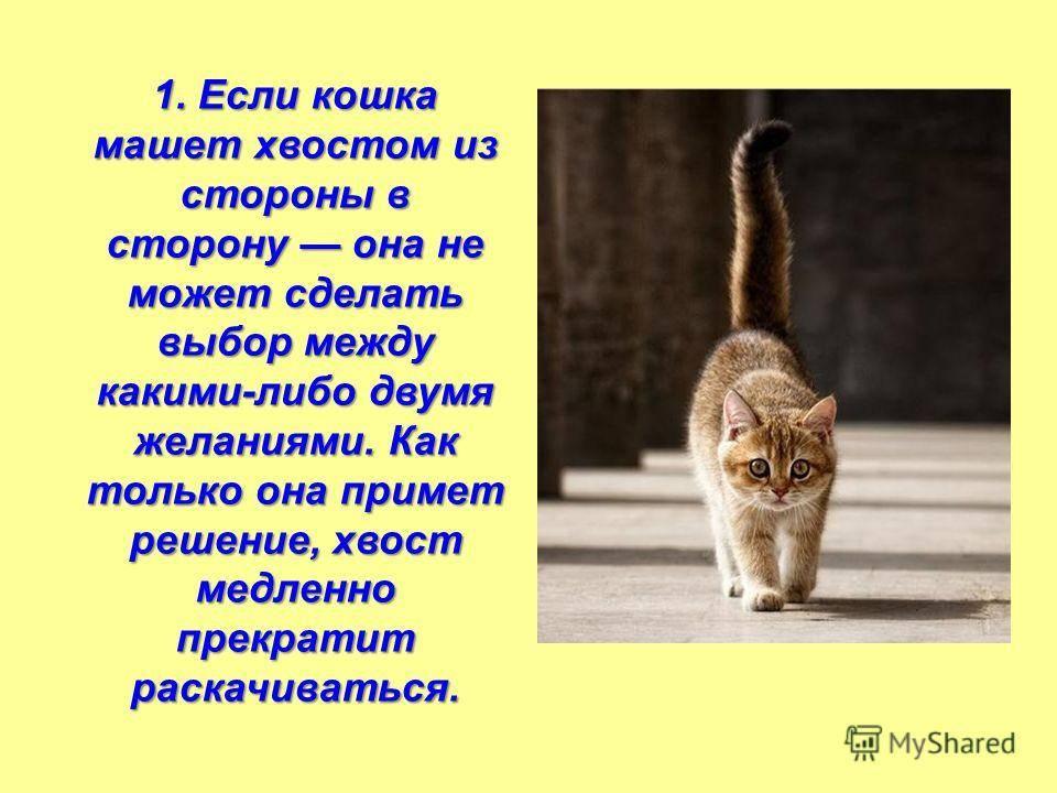 Почему кошки виляют хвостом — что это значит, эмоции кота