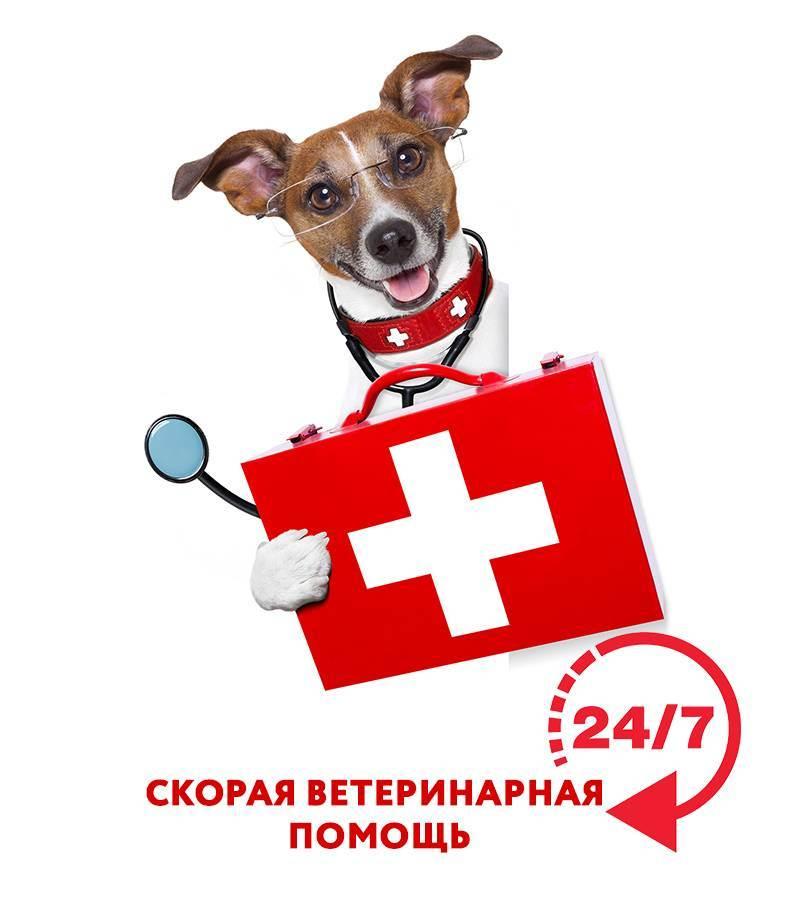 Ветеринар на дом, срочная ветеринарная помощь