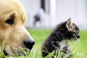 Основные ветеринарные процедуры для вашей собаки