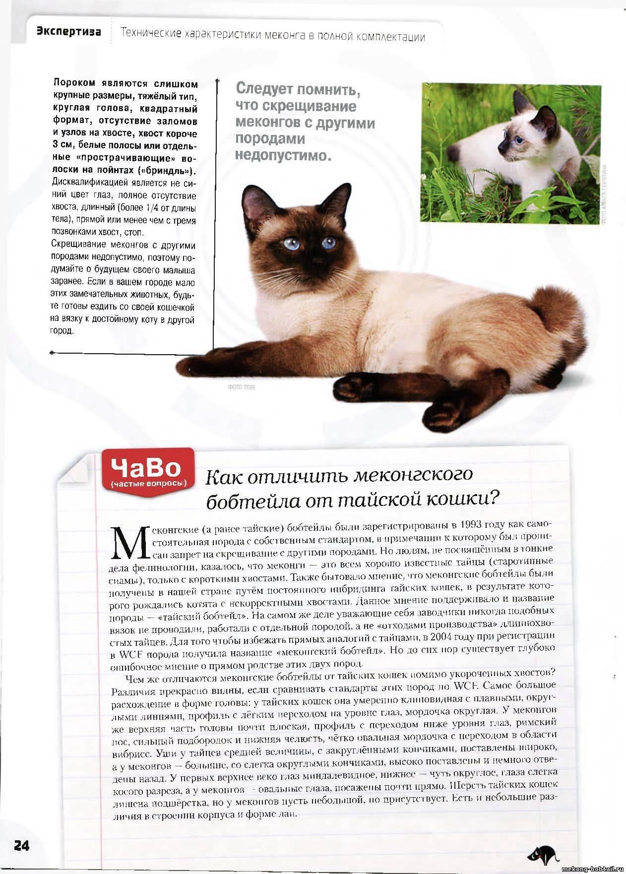 Тайская кошка: описание, цена, уход
