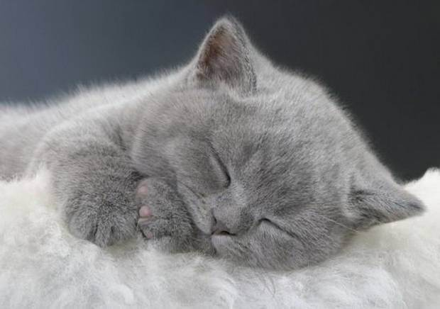 Кошка: 10 сонников толкуют к чему снятся кошки во сне