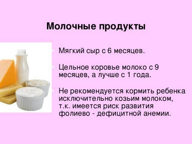 Можно ли коту молочные продукты и есть ли польза?