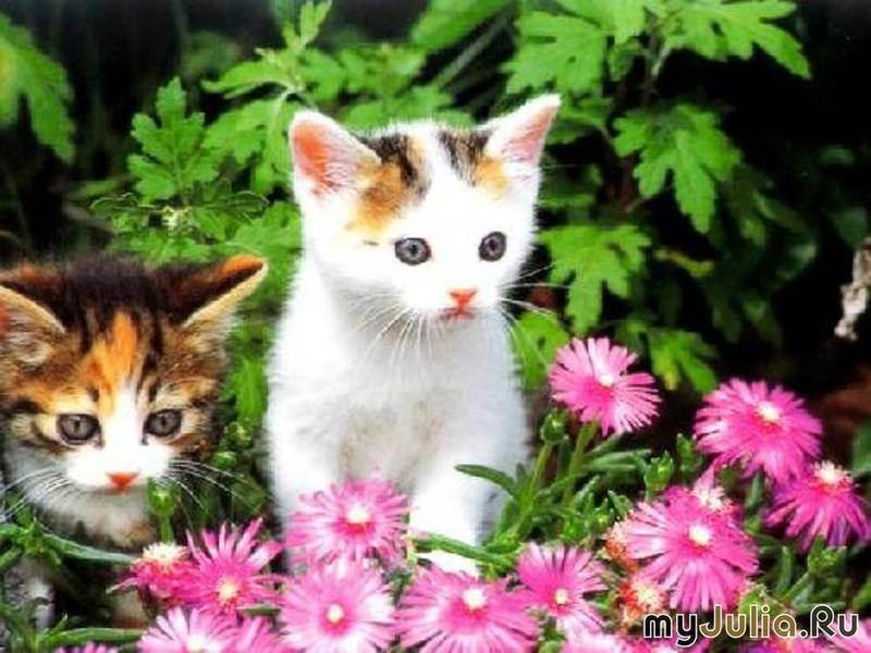 10 фактов о необычайных лечебных способностях кошек   витапортал - здоровье и медицина