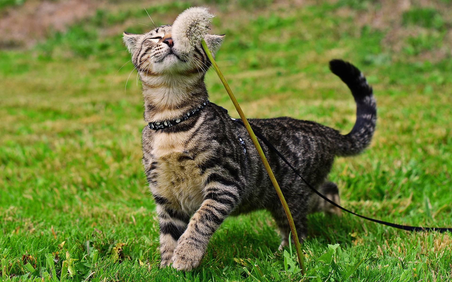 Что происходит в организме с кошки когда она гуляет   my darling cats